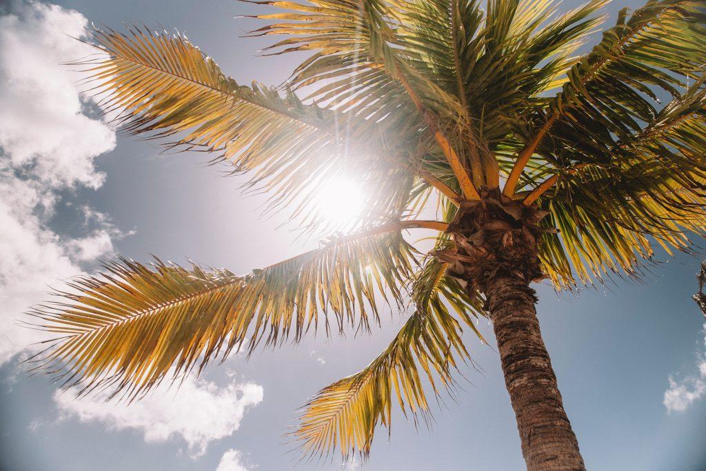 palmbomen zon en lucht