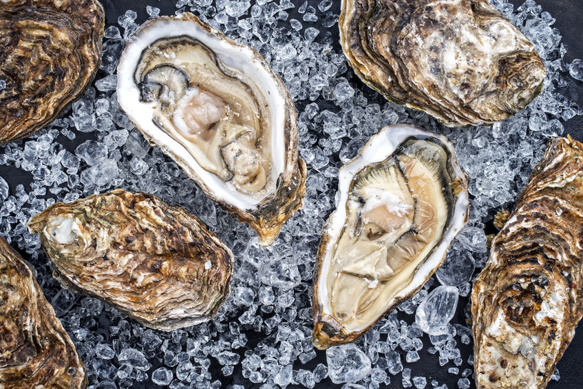 verse oesters