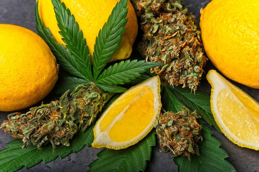 citroenen en dennenappels