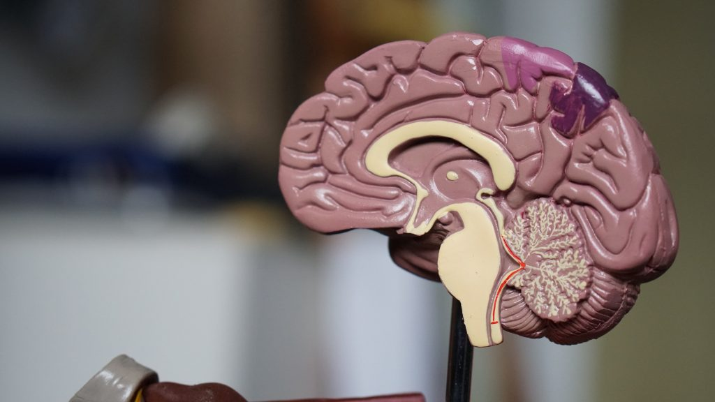 hersenen mockup